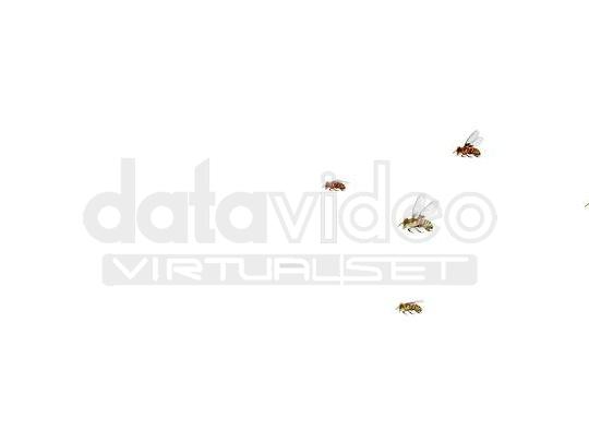 蜜蜂_01