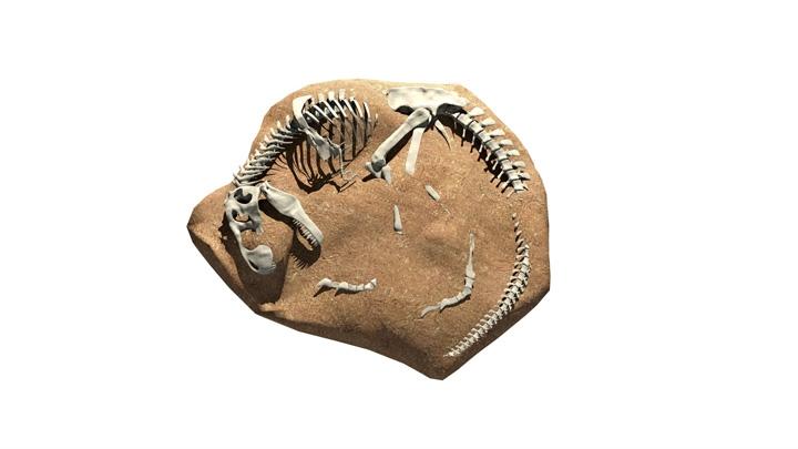 【TVS-3000_AR】化石